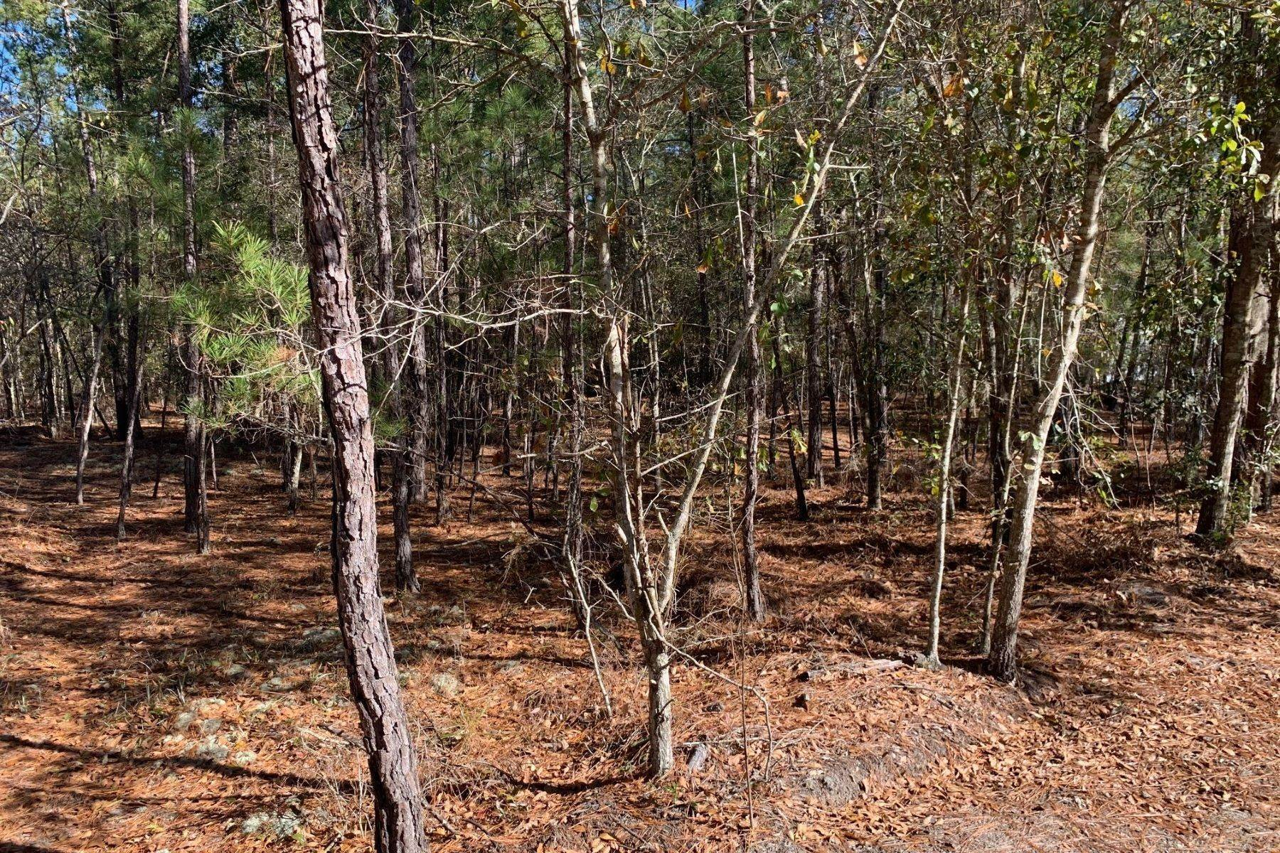 4. Land for Sale at Pine Forest Loop Ridgeland, South Carolina 29936 United States