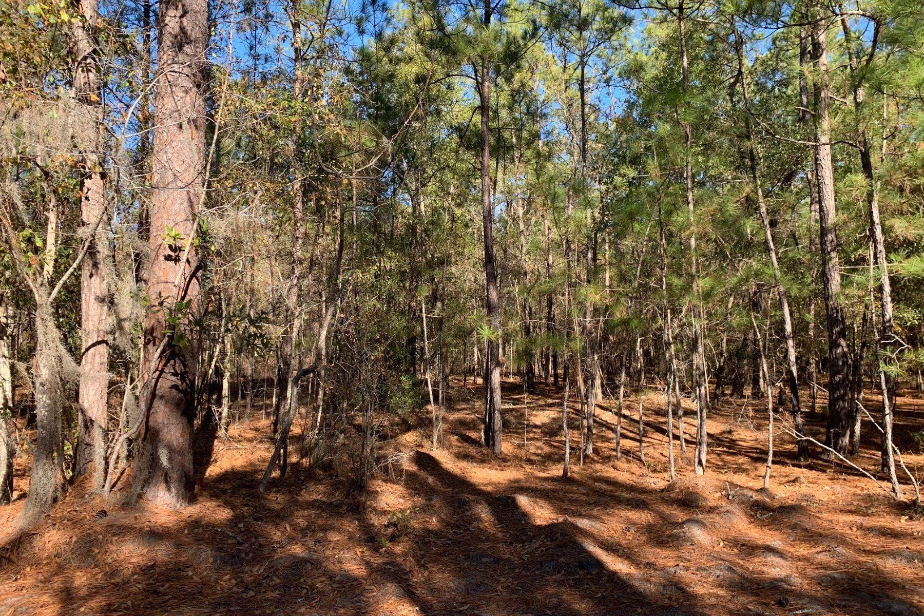 Land for Sale at Pine Forest Loop Ridgeland, South Carolina 29936 United States
