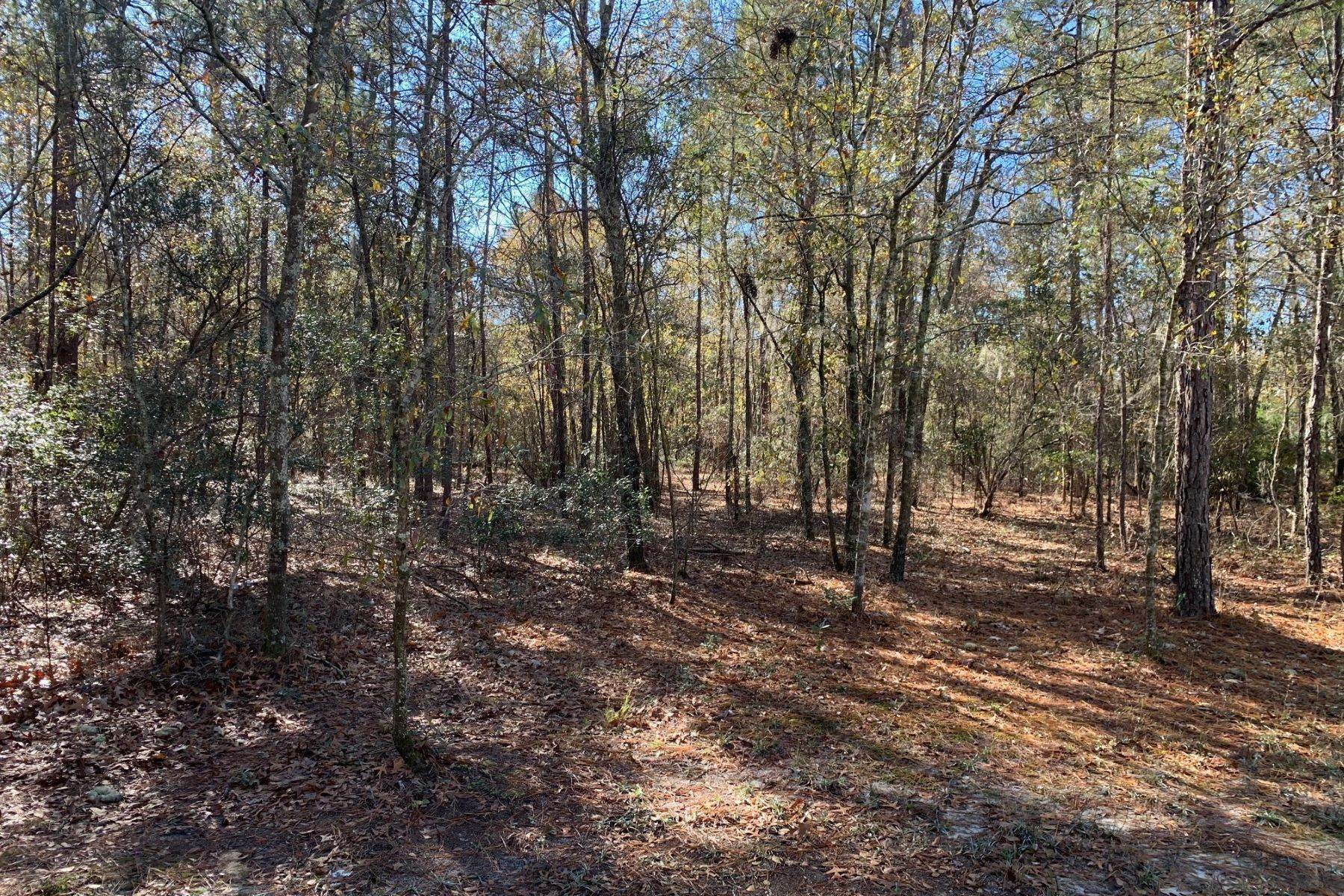 2. Land for Sale at Pine Forest Loop Ridgeland, South Carolina 29936 United States