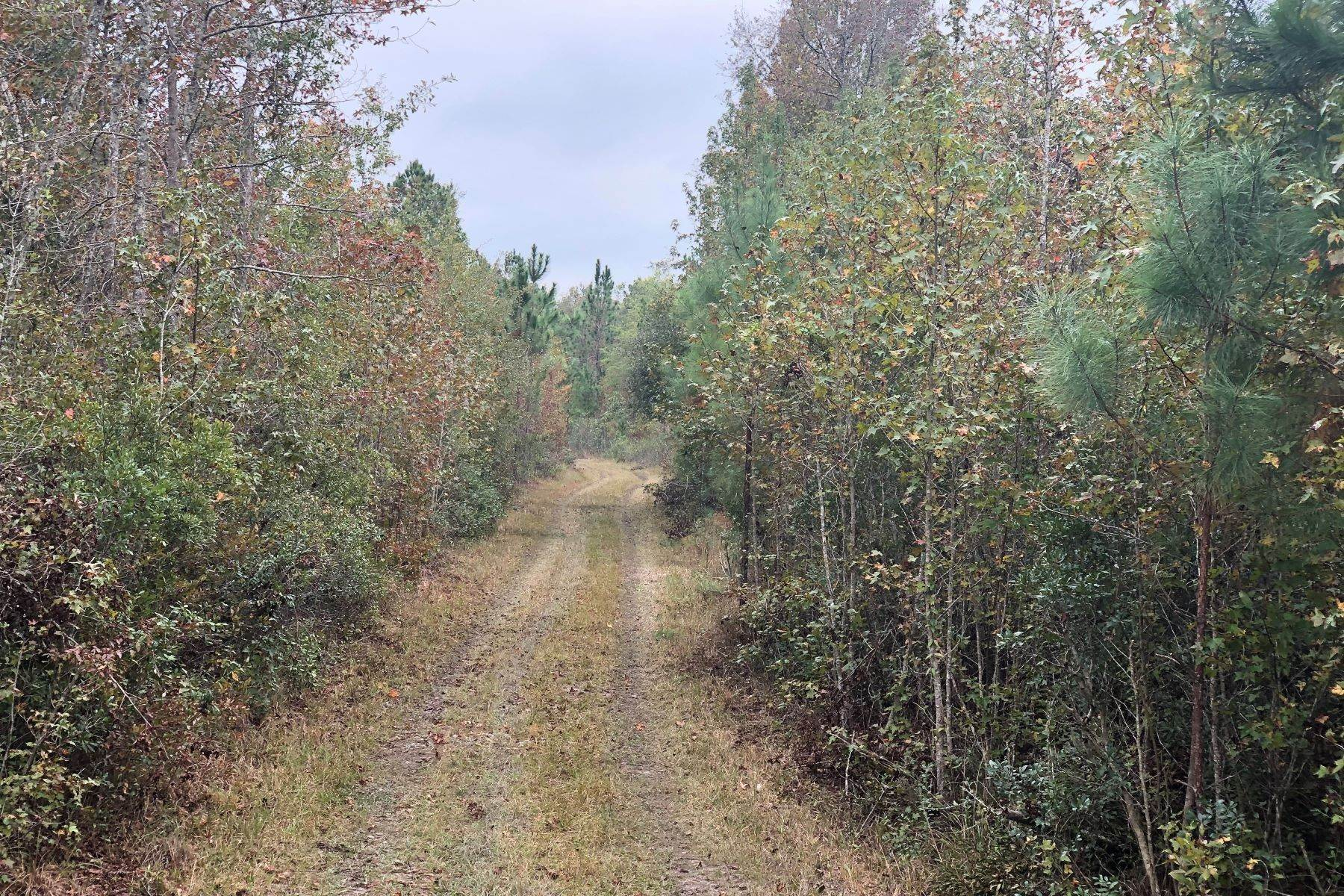 3. Land for Sale at 1081 Cohen Road Pineland, South Carolina 29934 United States